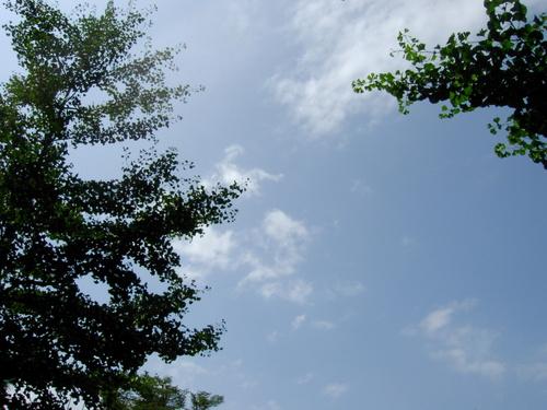 夏空~公園にて