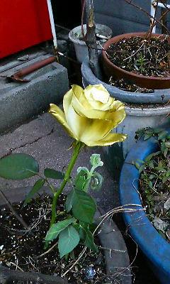 愛の薔薇掲げて遠回りして